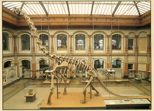 Giraffatitan-skeleton