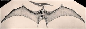 Pteranodon AMNH FR6158 - A 1950s vintage picture of the reconstructed The specimen was found by H.T. Martin in 1916. It measures about 16 feet from wingtip to wingtip.