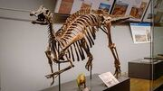 Ниппонозавр 6