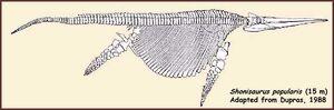 Shonisaurus popularis skeleton