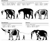 Elephant-sizes