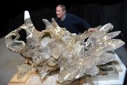 Regaliceratops skull