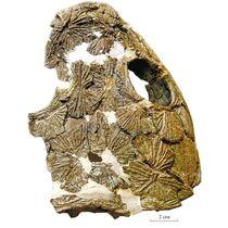 Двинозавр10