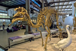 Amurosaurus skeleton