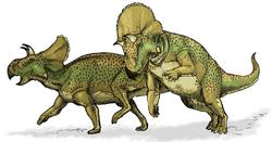 Авацератопсы
