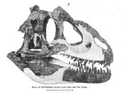 Antrodemus gilmore 1920