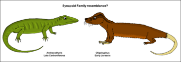 Synapsid family resemblance by pelycosaur24-d5f19x3