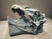 Abrosaurus skull