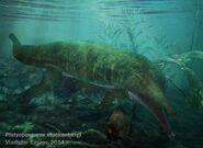 Platyoposaurus stuckenbergi (Art)