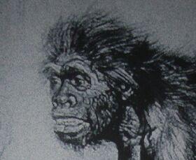 Неандерталец из ла-шапель-о-сен в реконструкции Франтишека Купки и М. Буля