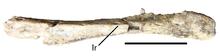 Eshanosaurus-0