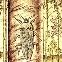 Tschekardocoleidae s