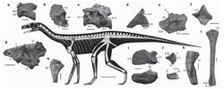 Асилизавр 4