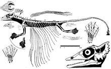 Целурозаврав-0