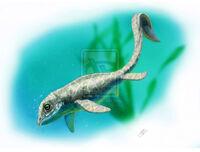 Cartorhynchus lenticarpus by malvit-d86rupz