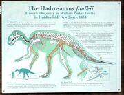 Hadrosaurus foulki isign