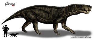 L. intactus