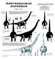 Argyrosaurus superbus skeleton