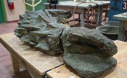 Nodosaur fossil 01 (2)