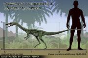 Coelophysis-size