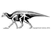 Parasaurolophus sp juvenile