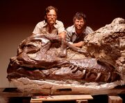 Tyrannosaurus Sue 04