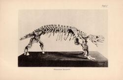 Скутозавр у Амалицкого