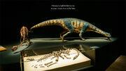 Adeopapposaurus skeleton