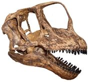 Череп европазавра