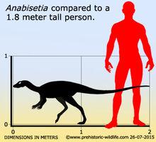 Anabisetia-size