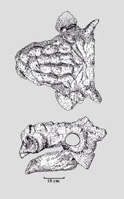 Tarchia gigantea PIN 3142-250