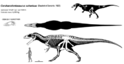 Carcharodontosaurus skeleton