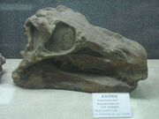 Huayangosaurus skull
