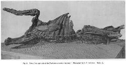 Trachodon mummy