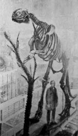 Первый скелет