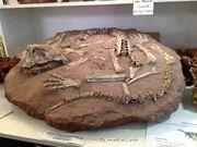 Psittacosaurus sinensis