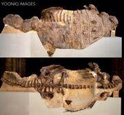 Scolosaurus cutleri NHMUK R.5161
