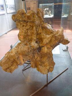 Ампелозавр 6