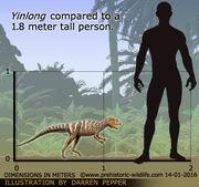 Yinlong-size