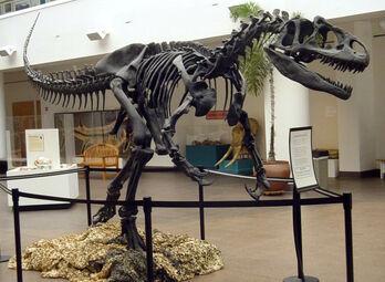 Allosaurus SDNHM (1)