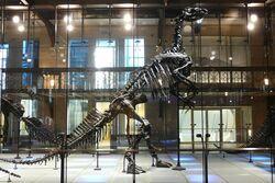 Iguanodon skeleton 01