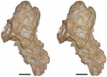 Bulbasaurus-13