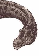 Лаплатазавр1