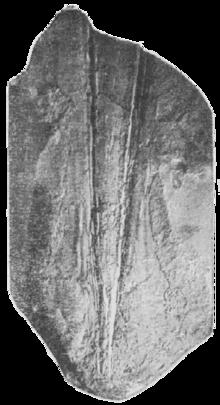 Плезиотевтис (впр) sp