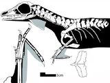 Киргиззавр
