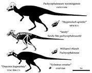 Pachycephalosaurids