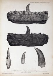 1824 Buckland's Megalosaurus jaw teeth
