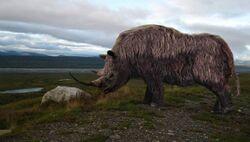 Шерстистый носорог 4