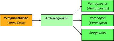 Archaeagnostus таксономия