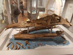 Pliosaurus westburyensis skull 02